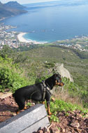 dog-on-lionshead_lightbox